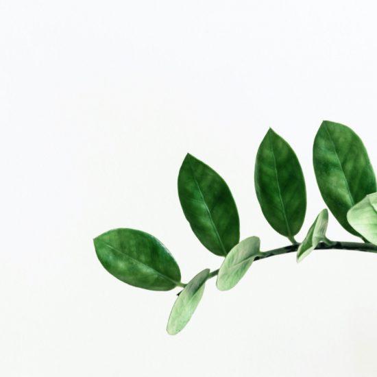 plante-fond-blanc-hp